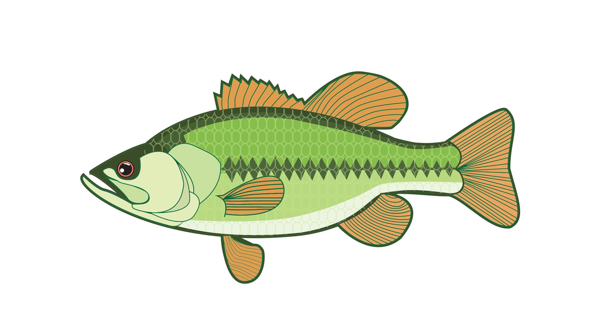 Pro Fishing Rigs